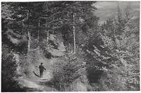 Waldweg bei der Kranebitterklamm, Orig.-Photo um 1910