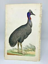 Galeated Cassowary - 1783 RARE SHAW & NODDER Hand Colored Copper Engraving