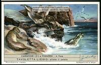 Harbor Seal Sea Mammal Ocean  60+ Y/O Trade Ad Card