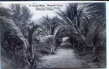 CP Congo Belge - Avenue des Palmiers à Banana