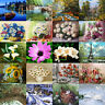 40*50cm DIY Acrylic Painting Canvas Paint By Number Flower Waterfall Scene Frame