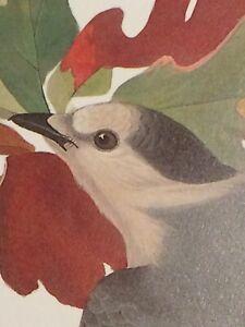 "Gray Jay Audubon Print 11.5"" x 15"" Lithograph 281"