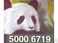 Bob Ross  transparent Schwarz 37 ml T.Tiermalerei   6719