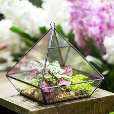 Vertebral Glass Geometric Terrarium Box Tabletop Succulent Planter Fern Moss