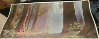 """Serenity by Paul Detletsen 1964 -- 25"""" X 49"""" In Old growth redwoods Big Litho"""