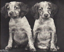 """Ylla - 2 chiots  - Photogravure in  """" AMG 1937 """""""