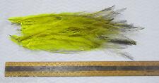 EMU FEATHERS DYED,,LEMON, tail medium/long