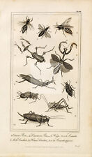 ANTIQUE Natural History Print - Bee, Queen Bee, Wasp, Locusts, Cricket #E980