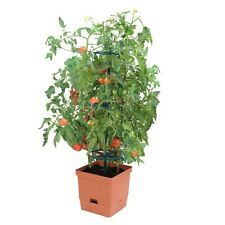 GP0100 - Moss Tomato Tower - Water Saving Self Watering Pot - Climbing Rings