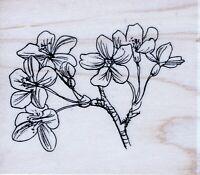 Hobby Art - Rubber Stamp on Wood - Cherry Blossom - OR1836E