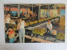 E525 Postcard New Orleans Banana Port Factory Unloading ship LA Louisiana