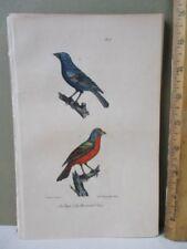 Vintage Print,PAPE,BOUVREUIL BLEU,Bird,BUFFON,1707-88,c1828