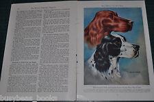 1947 magazine article BIRD DOGS, color artwork, Spaniels Setters Retrievers etc