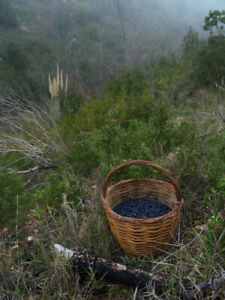 Dried Myrtle berries 450 gr (15.87 oz) EXP: FEB 2022