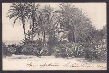 IMPERIA BORDIGHERA 144 GIARDINO WINTER Cartolina viaggiata primi '900