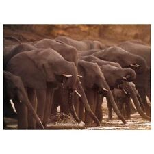 Ikea Bjorksta Picture Art Canvas African Elephants 203.205.43 NO FRAME New