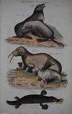 Originaldrucke (1800-1899) mit Zoologie-Motiv und Kupferstich-Technik