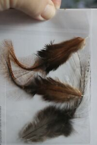 Fly Tying Coq de Leon Saddle Tailing Pack with medium brown and dark pardo