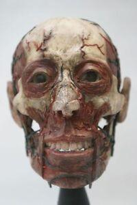 ANATOMICAL MODEL OF HUMAN HEAD CHALK AND WAX SKULL METAL TIN SIGN WALL PLAQUE