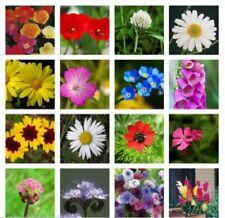 MEADOW WILD FLOWER BUTTERFLY & BEE MIX 16,000 SEEDS poppy cornflower oxeye daisy