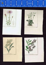 1831 Benjamin Maund Botanical Flowers  (Set of 4) Lot D