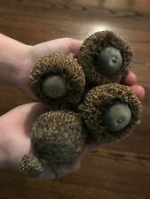 25 XL GIANT BURR OAK ACORNS FOR CARVING, CRAFTS, FAIRY GARDENS, DISPLAY AND ARTS