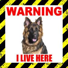"""Attention je vis ici """"BERGER ALLEMAND"""" - Porte, Fenêtre Autocollant, Dog, Pet, Animaux,"""
