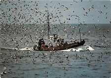 BF37339 retour de peche a la sardine  en bretagne   france  Boat Ship Bateaux