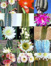CEREUS CACTUS MIX, rare garden night cacti exotic desert succulent seed 50 seeds