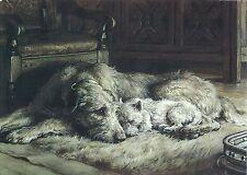 Irish Wolfhound Print, Wolfhound with Westie