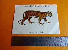CHROMO 1939 CASINO LES ANIMAUX CARNASSIERS N°74 LE TIGRE FELIN