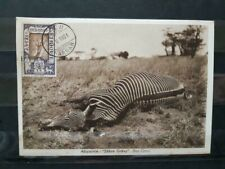 Ethiopia Hunt Postcard Card Harrar 1931 Ethiopie Carte Zebra