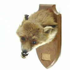 Fox Taxidermy Collectables
