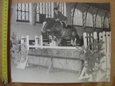 Photo d un cheval de course CONCOURS EQUITATION VENTE COMPETITION 4