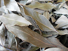 50g Dried Herb BAY LEAVES Organically Grown 50g