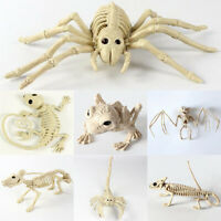 Halloween Skeleton Bat Frog Lizard Spider Props Animal Bones Party Decor Horror