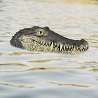 1pcs Floating Simulation Alligator Head Realistic for pool keep duck away