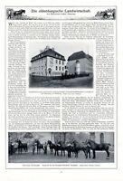 Oldenburgische Landwirtschaft Bericht 1912 2 XL S. 8 Abb. Oldenburg Pferdezucht
