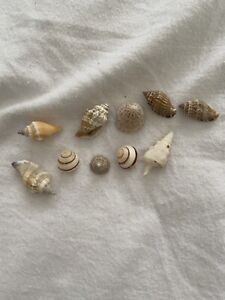 **NEW** Hermit Crab Shells X10 1.5-3.5cm (Fish Tank/Aquarium)