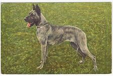 GREAT DANE STANDING DOG OLD PICTURE POSTCARD