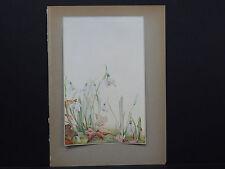 Botanicals, Floral, Edward J. Detmold, c. 1913 #13