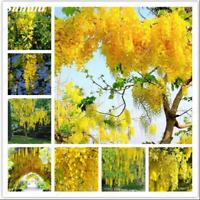 10 Pcs Golden Yellow Wisteria Seeds Bonsai Free Shipping Non Gmo No Rare 2021