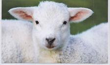 Grußkarte / Klappkarte: Schaf - schönes Porträt - sheep