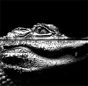 FL Gator Garage Raider