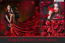 Falling Red Rose Petals Photo Overlays,Rose Petals,Transparent background