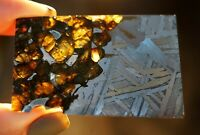 Meteorite Seymchan Pallasite slice GIFT FROM SPACE