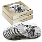 8 x Boxed Round Coasters - BW - Texas Longhorn Cow Cattle #39229
