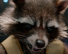 Bradley Cooper Rocket raccoon guardians of the galaxy picture 8x10 photo 29