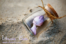 1/12 BJD Doll Little Bean Creative Exquisite Gift Skin Color + Makeup Toy