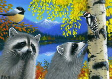 Raccoons chickadee woodpecker birds aspen lake limited edition aceo print art